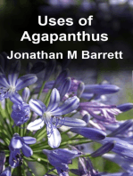 Uses of Agapanthus