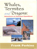 Whales, Termites and Dragons