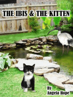 The Ibis & the Kitten
