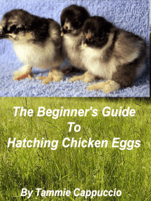 The Beginner's Guide to Hatching Chicken Eggs