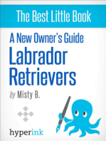 A New Owner's Guide to Labrador Retreivers