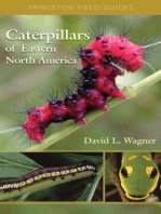 Caterpillars of Eastern North America