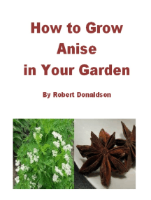 How to Grow Anise in Your Garden