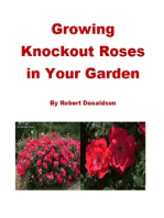 Growing Knockout Roses in Your Garden