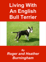 Living With An English Bull Terrier