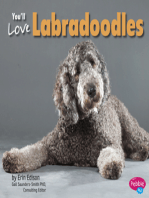 You'll Love Labradoodles