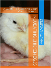 Incubating Chicken Eggs: A Guide to Hatching Your Own Chickens