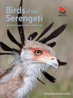 Birds of the Serengeti