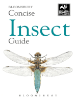 Concise Insect Guide