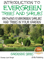 Introduction to Evergreen Trees and Shrubs