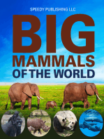 Big Mammals Of The World