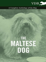 The Maltese Dog - A Complete Anthology of the Dog