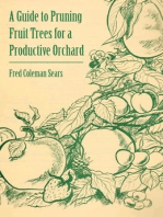 A Guide to Pruning Fruit Trees for a Productive Orchard