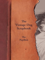 The Vintage Dog Scrapbook - The Papillon