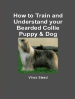 How to Train and Understand Your Bearded Collie Puppy & Dog