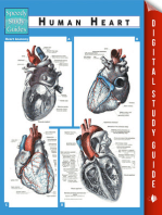 Human Heart (Speedy Study Guides)