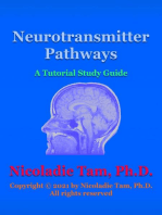 Neurotransmitter Pathways
