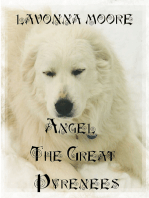 Angel The Great Pyrenees