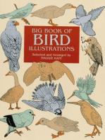 Big Book of Bird Illustrations