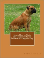 Learn How to Train and Understand your Bullmastiff Puppy & Dog