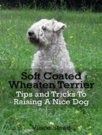Soft Coated Wheaten Terrier Tips and Tricks To Raising A Nice Dog