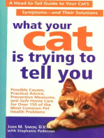 What Your Cat Is Trying To Tell You