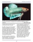Study on supply chain - Ornamental Fish International
