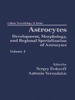 Astrocytes Pt 1