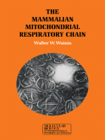 The Mammalian Mitochondrial Respiratory chain
