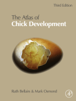 Atlas of Chick Development