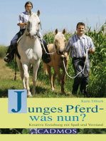 Junges Pferd - was nun?