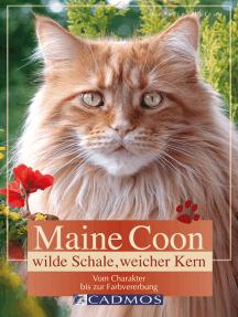 Maine Coon - Wilde Schale weicher Kern: Vom Charakter bis zur Farbvererbung