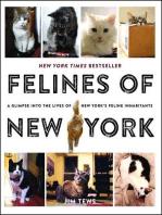 Felines of New York