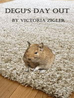 Degu's Day Out
