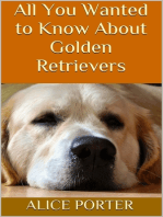 All You Wanted to Know About Golden Retrievers