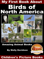 My First Book About the Birds of North America