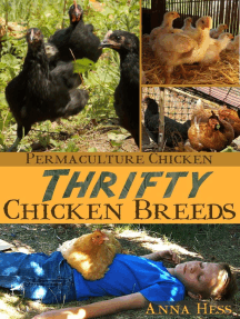 Thrifty Chicken Breeds: Efficient Producers of Eggs and Meat on the Homestead: Permaculture Chicken, #3