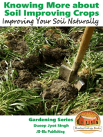 Knowing More about Soil Improving Crops