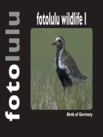 fotolulu wildlife I