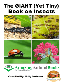 The GIANT (Yet Tiny) Book on Insects