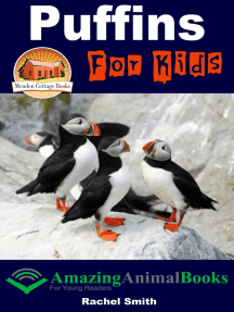 Puffins For Kids