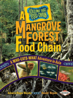 A Mangrove Forest Food Chain