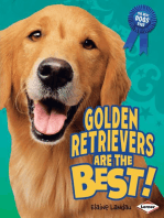 Golden Retrievers Are the Best!
