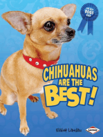 Chihuahuas Are the Best!