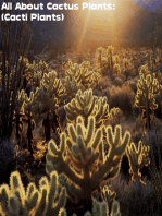 All About Cactus Plants