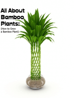 All About Bamboo Plants