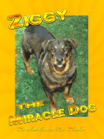 Ziggy the Miracle Dog
