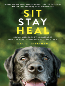 Sit Stay Heal: How an Underachieving Labrador Won Our Hearts and Brought Us Together