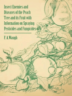 Insect Enemies and Diseases of the Peach Tree and its Fruit with Information on Spraying Pesticides and Fungicides