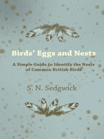 Birds' Eggs and Nests - A Simple Guide to Identify the Nests of Common British Birds